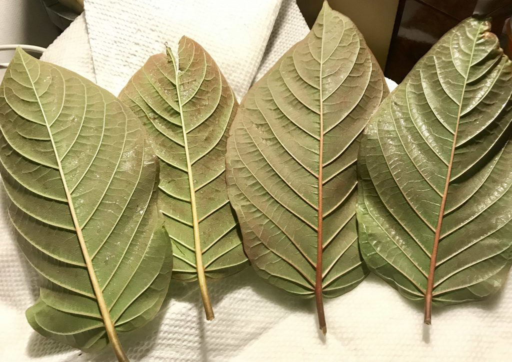 Red Vein Kratom Review: Most Popular Strains, Effects