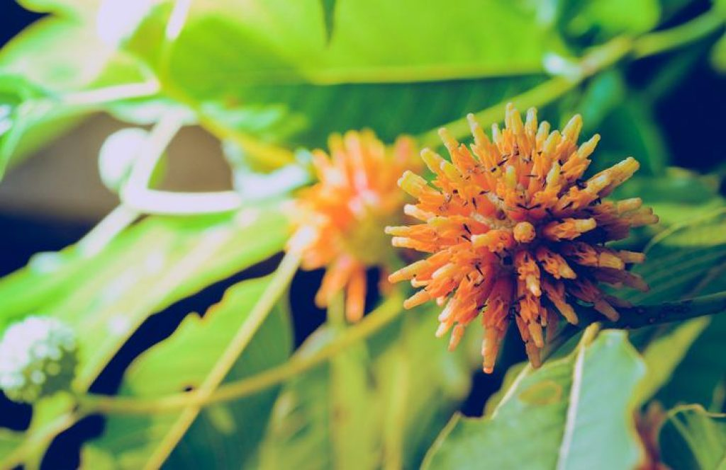 Best Kratom Strains For Euphoria, Energy And Focus - lpath
