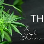Best THC detox kits
