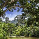 Red vein sumatra kratom dosage